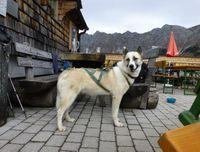 schlittenhunde-hotel-pension.jpg